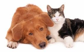 Risultati immagini per sterilizzazione cane e gatto