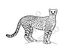 Disegni Di Animali Africani Uffolo Con Animali Da Colorare E
