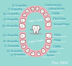 Baby Teething Chart What Order Do They Come In Baby