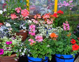 outdoor potted plants in winter when
