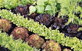 grow your own veg with my planting
