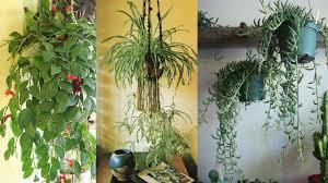 9 Best Indoor Hanging Plants - Let's Go Green