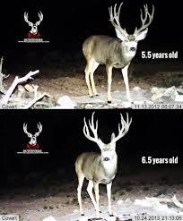 Deer Antler Age Chart The Keys To Antler Growth Age Genetics Nutrition Gohunt