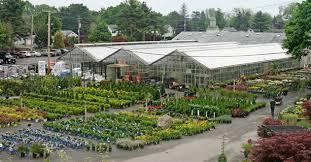 garden centers in ma.  Garden Mahoneyu0027s Winchester  Garden Centers 242 Cambridge St  Winchester MA 01890 Inside In Ma O