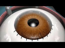 cataract surgery 2009 you