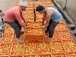 Image result for sell-tomatoes