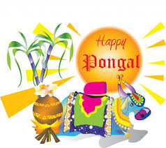 pongal greetings celebration picture photos archive pongal greetings celebration picture photos archive love limes