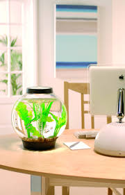 office desk fish tank. With A Capacity Of The Small And Perfectly Formed Classic Baby BiOrb Has Same Filtration System As Other Reef One Aquariums Comes Office Desk Fish Tank O