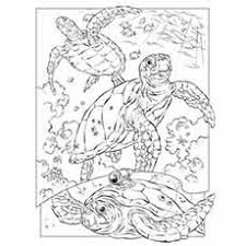 While children are aware that fish live in water, they may not be as aware of to print, simply click on the printable of your choice. 35 Best Free Printable Ocean Coloring Pages Online