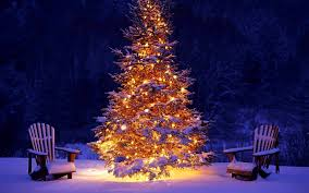winter holiday snow forest christmas tree lights happy new year christmas  winter snow forest christmas tree