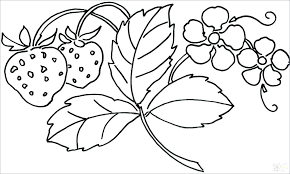 Coloring Pages Flowers Flowers In Vase Coloring Pages Flowers In