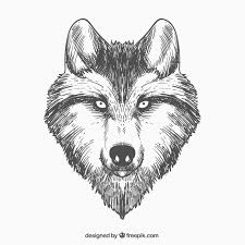 Drawn Wolf Hand Drawn Wolf Face Vector Free Download