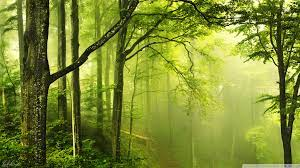 25+] HD Green Forest Wallpapers on ...
