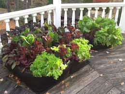 Small Picture Garden Design Garden Design with Local foods u Organic deck