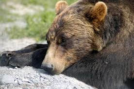 Image result for hibernation