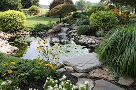 tips for a successful garden pond