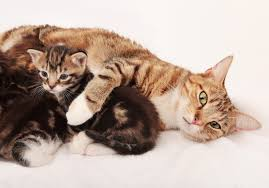 15 pictures of mama cats and kittens for mother s day