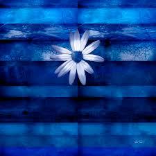 daisy digital art white daisy on blue abstract art by ann powell