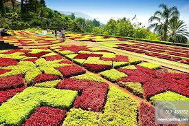 the madeira botanical garden funchal madeira portugal