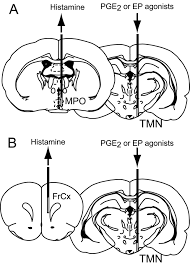 Fuse Diagram 2000 Gmc