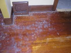 can any hardwood floor be recoated