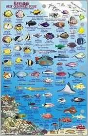 Oahu Fish Chart Oahu Hawaii Map Coral Reef Creatures Guide Franko Maps