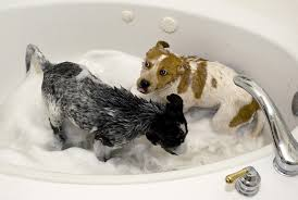 the biggest issue with washing dogs in the tub is the amount of hair they shed excessive pet hair can become a huge problem as it clumps into a ball and