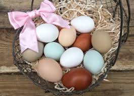 A Guide To Different Colored Chicken Eggs Backyard Poultry