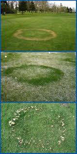 Turf Disease Turf Plant Disease Diagnostics Clinic