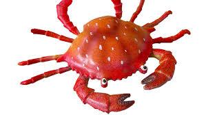 Arti Mimpi Kepiting Merah Angka Jitu Pool303
