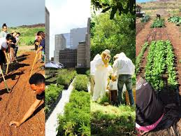 hundreds to attend national sustainable agriculture education conference on uhwo campus