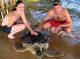 Image result for turtle island tour bali