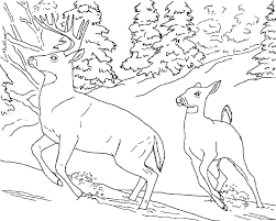 White Tailed Deer Coloring Page Free Printable Deer Coloring Pages ...