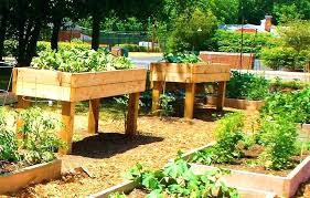 ideas for making raised garden beds also raised garden bed design raised bed garden design cool cedar raised garden beds designs raised for create