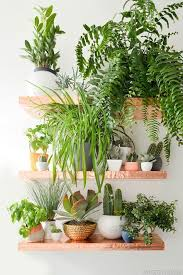 Eleven Ways to Add Plants to your Decor