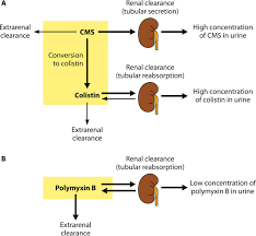 Polymyxins Antibacterial Activity Susceptibility Testing And
