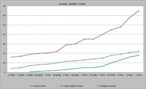 Iguana Growth Chart Our Reptile Forum