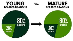Bearded Dragon Nutrition Chart Bearded Dragon Diet Guide Feeding Your Bearded Dragon The