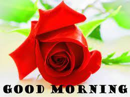 red rose romantic good morning photo hd ...