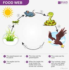 food web all processes in this world whether living or non living needs energy living organisms are capable of producing energy or getting it through