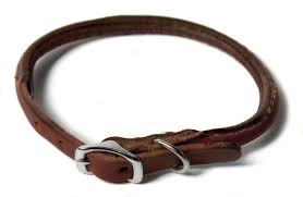 rolled leather buckle dog collar leather dog collar rolled leather dog collar dog direct