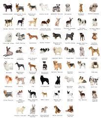 Dogs Breeds Credits To Jazza From Jazzastudio Dog Breeds