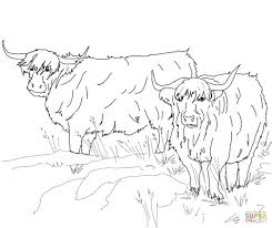 Small Picture Scottish Highland Cattle coloring page Free Printable Coloring Pages