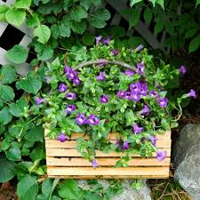 Best Plants For Shade Container Gardens Ideas  Home InspirationsContainer Garden Ideas For Shade