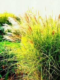 interior landscaping office. A Garden Bed Of Grasses Landscaping Ideas And Hardscape Design Sun Loving Ornamental Grass Interior The Office R