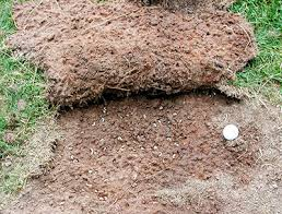 How To Choose And When To Apply Grub Control Products For Your Lawn ...