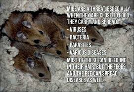 keep mice out of your bbq grill