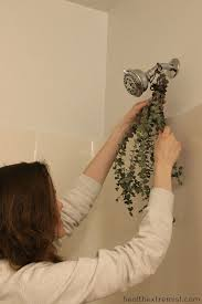 how to hange eucalyptus in the shower to ease congestion i hang eucalyptus in my