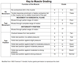 Muscle Location And Function Chart Manual Muscle Testing Grading And Procedures Occupational