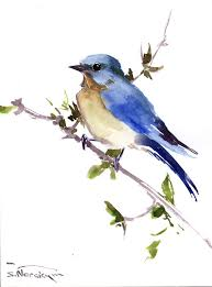 eastern bluebird original watercolor painting 12 x by originalonly